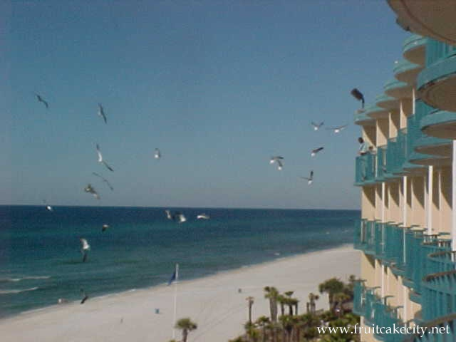 Seagulls Found At The Panama City Beach